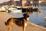 Maza, pas koji se vratio kući