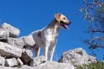 Luki Guardian of Hvar's Treasures: Tor