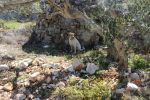 Luki, Guardian of Hvar's Treasures: Poljica