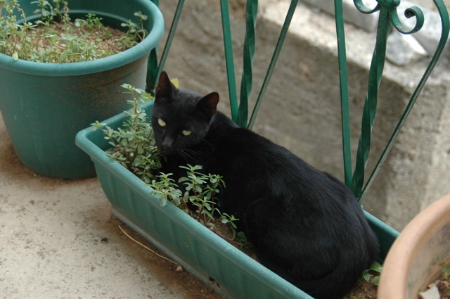 black cat flowertray sept15