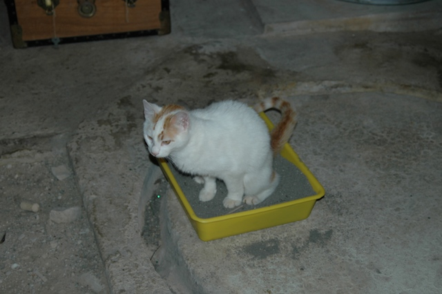 boysie litter tray