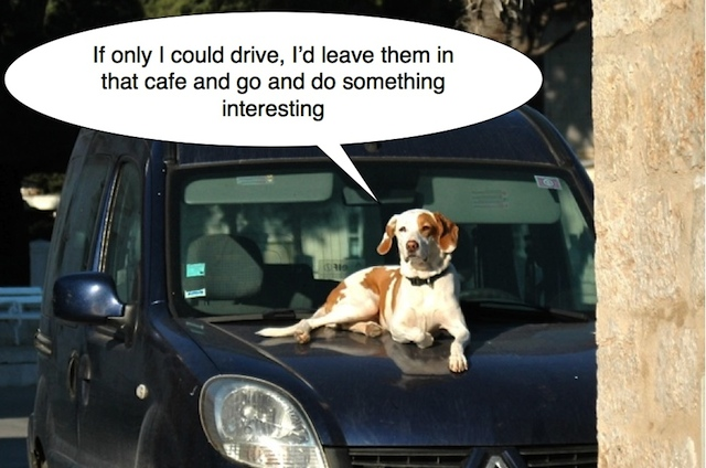 dog car bonnet captioned