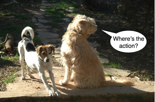 dogs nada mala action captioned