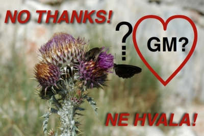 GMOs good for butterflies and wild plants?