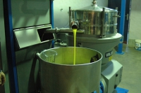 Dalmatian olive oil, pure gold