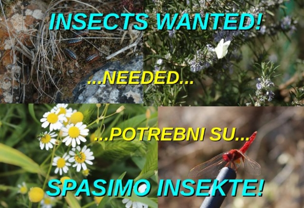 Insects Wanted!